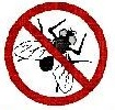 Controlling Fly Pests